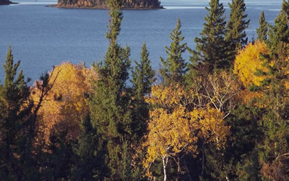 Fall colors in Prince Albert National Park